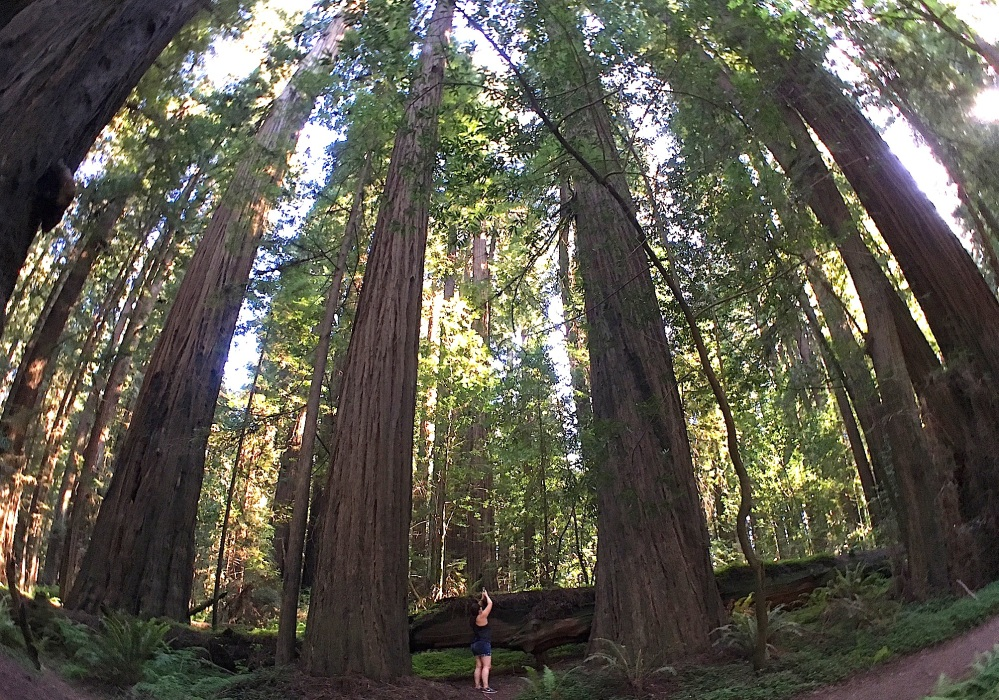 Humboldt Redwoods State Park, California